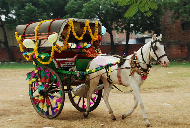 Image result for at taj mahal horse cart